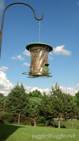 bird feeder_tag