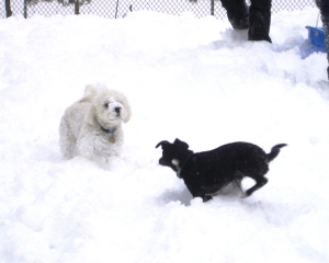 Dogs know how to play...so should we