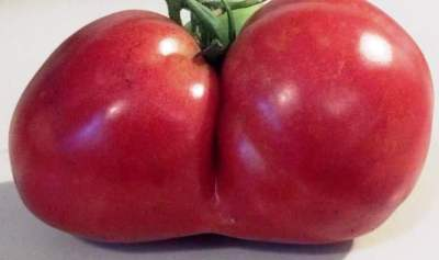 tomato-booty