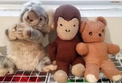 curious george-teddy bear-koala bear